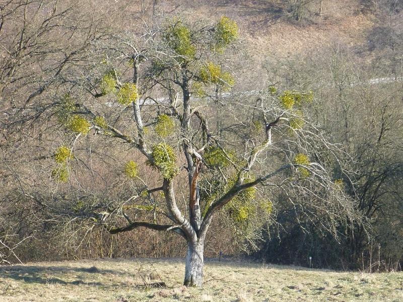 tree-662286_1280