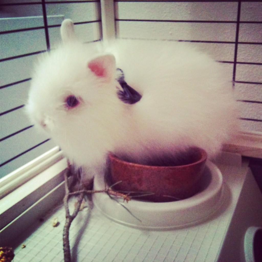 Můj bílý králíček jako miminko