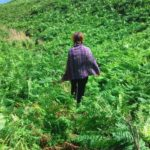 Víly, skřítci a Cornwallští rarachové