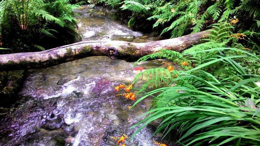 kmen položený přez potok