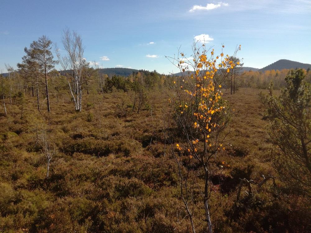 šumavské bažiny