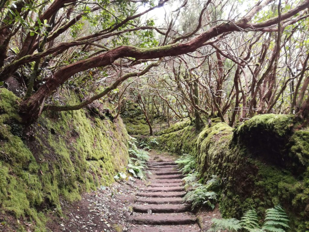 mlžný prales