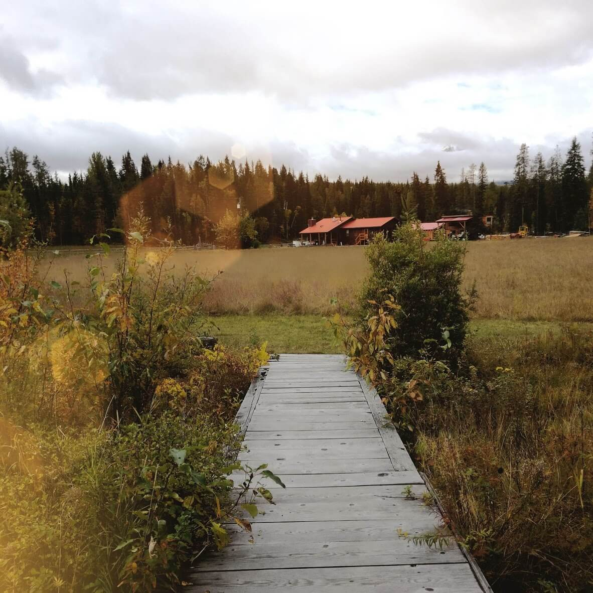 Kanadská kronika: První dny na buffalo ranči