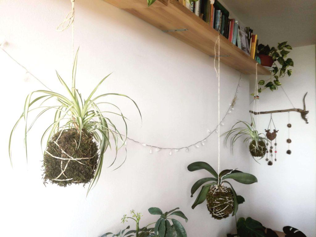 Závěsné pralesničky a odkvětlá orchidej